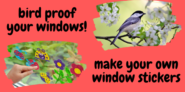 Bird Proof Your Windows - Ages 6 to 9