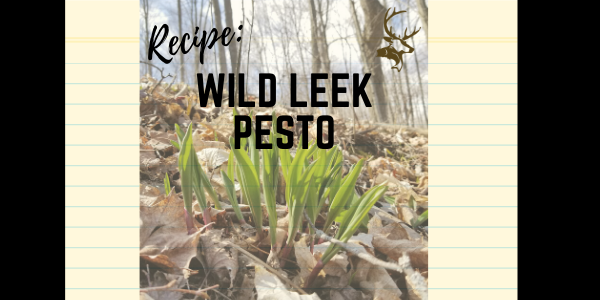 Wild Leek Pesto Recipe - Ages 10+
